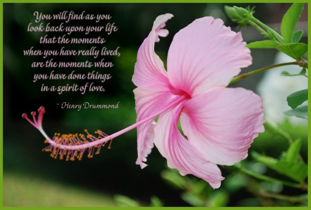 pink lily photo w_ quote